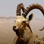 В пустыне тоже есть жизнь !