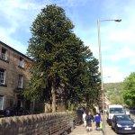 Street view of Ashdale