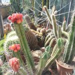 Foto di Botanical Garden