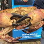 Up close with lobsters and crabs