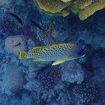 Photo of Sonesta Pharaoh Beach Resort Hurghada
