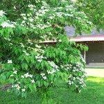 Tobaccoville Village Park