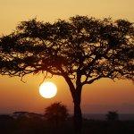 Serengeti Pioneer Camp Foto