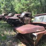 Roadside Rusted Ford Trucks