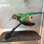 Foto de Horniman Museum and Gardens