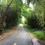 Periwinkle Way Foto