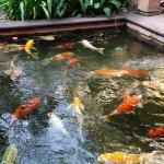 Peces del patio