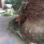 The cats roam around quite freely including in the garden and the breakfast room.