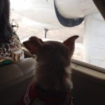 Kula in the prop plane we took to Vieques