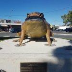 Big Cane Toad