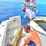 Measuring our Hammerhead after Tagging her for release