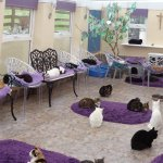 The cat's conservatory