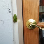 Little Frog on our door jam saying by to us.