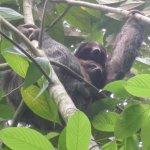 Sloths at Finca Verde Lodge