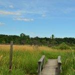 Wooden bridge through a prairie
