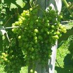 Foto de Turdo Vineyards & Winery