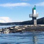 Photo de Wild Whales Vancouver