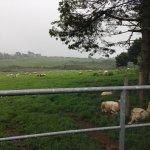A quick roadside photo of a pretty pasture scene