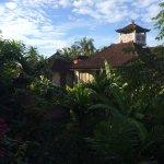 Foto de Frangipani Tree