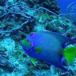el pez mas colorido