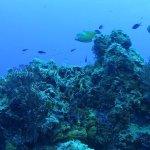 hermosos corales