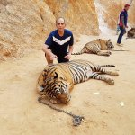 Photo de Tiger Temple Thailand Tour