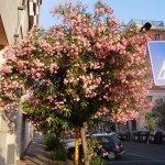Вокруг отеля масса цветущих растений