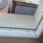 dead bugs in the window sill....also found a dead bug in the bathroom