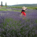 Green man lavender farm