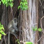 Monkey on Resort Grounds