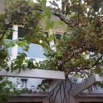 beautiful vines growing on patio