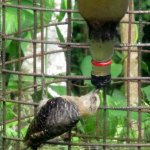Bird hanging upside down to get nectar