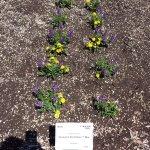 Annual Flower Trial Garden Foto
