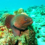 I'm grateful Andy was brave enough to capture this beautiful Moray.
