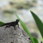 ...and friendlier Anole lizards