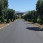 Opus One Winery Foto