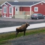 A visitor on the front lawn of Viking Nest BnB. Majestic.