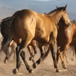 Horses are beautiful and well treated!