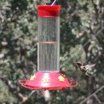 Humming bird at Anne Lange's