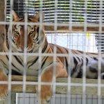 Foto de Octagon Wildlife Sanctuary And Rehabilitation Center