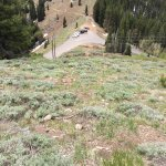 Hike to summit of Tri County peak from Guardsman Pass