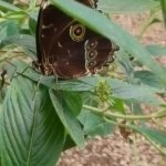 Foto de Nathaly Butterfly Garden