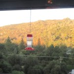 View of Hills and Hummingbirds, Sweetwater Steakhouse, Oakhurst, CA
