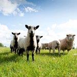CRAZY BEAR FARM SHOP