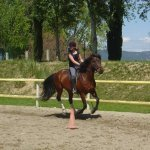 Centre Equestre Mallemort Pont Royal, l'écurie du soleil