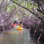 tunnel of mangroves