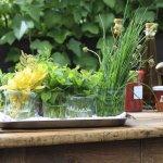 Frische Heimatküche mit Kräutern aus eigenem Garten