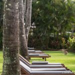 Canguru no jardim do hotel