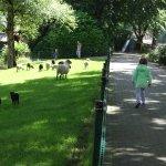 Male owieczki