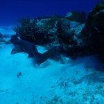 Foto de NIrvana Diving School